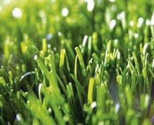 grasmaaier scherp